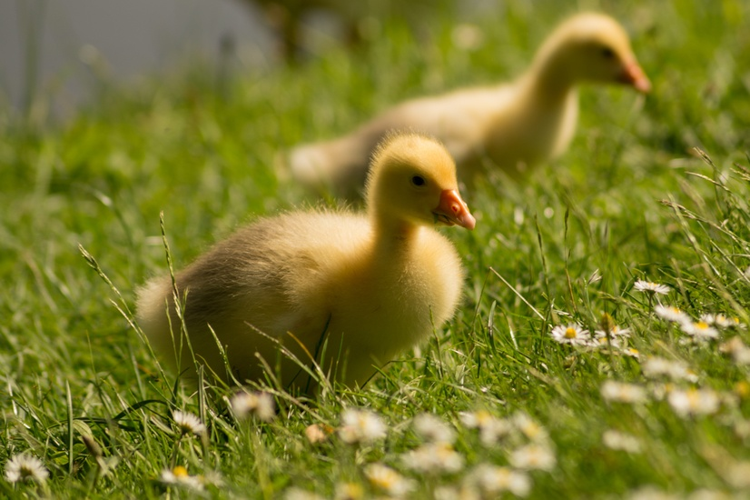 lawn-meadow-close-up-view-animals-large